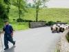 Les bergers aussi ont 7 heures de marche dans les jambes !